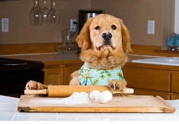 dog-bake