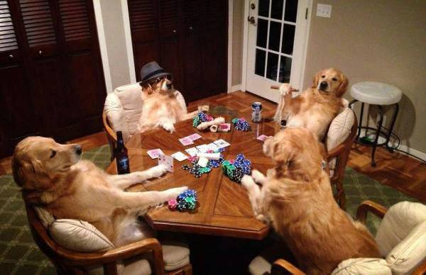 dog-party-funny