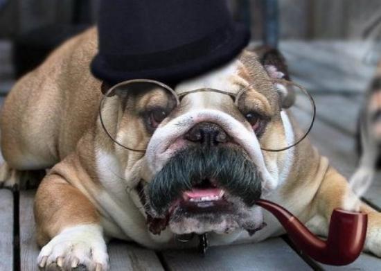 funny detective dog