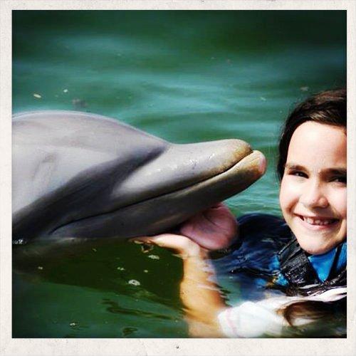 2972014 mesa delfini