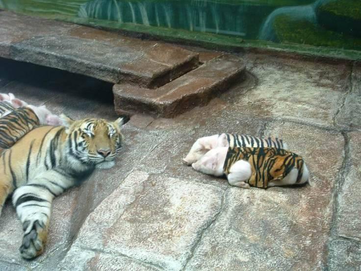 mom_tiger_1_copy