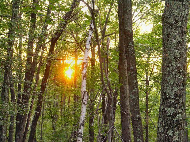 Φιλοσοφία της Αστρολογίας – Οι έννοιες του Πεδίου και του Κύματος