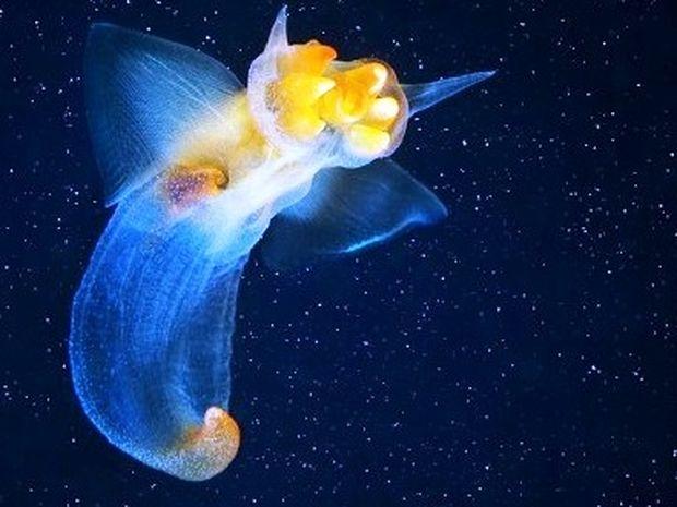 Υπέροχα παράξενα θαλάσσια πλάσματα