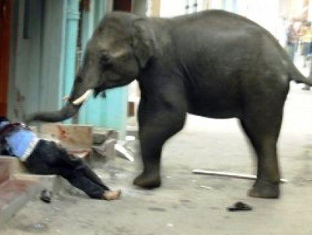 Iνδία: Πανικός από εισβολή ελεφάντων σε κατοικημένη περιοχή