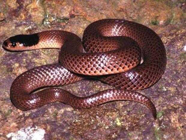 Το φίδι και το πεπρωμένο του Κάρολ