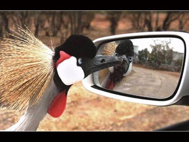 Καθρέφτη, καθρεφτάκι μου