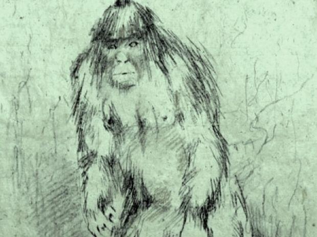Το θρυλικό «χιονάνθρωπο» ψάχνουν επιστήμονες