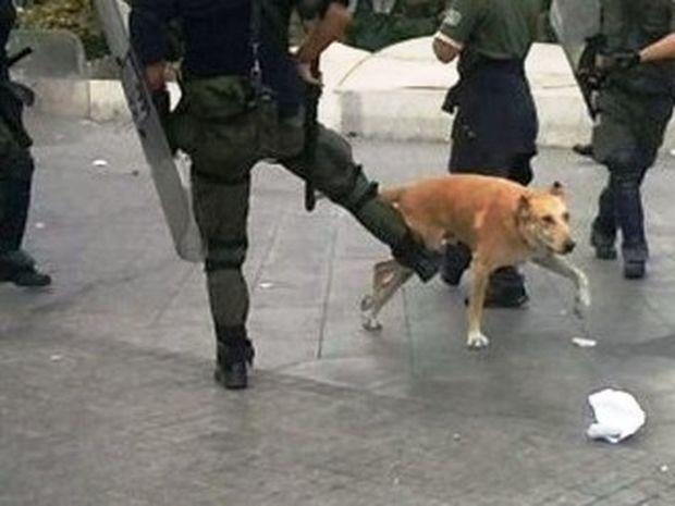 Θύμα της βίας των ΜΑΤ έπεσε και ο «Λουκάνικος»