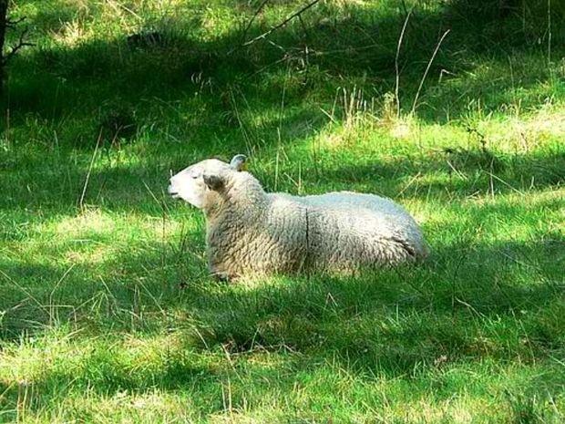 Σκορπιός - Τα... άσπρα πρόβατα