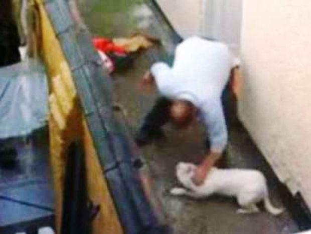 Απειλήθηκε με λιντσάρισμα λόγω κακοποίησης σκύλου