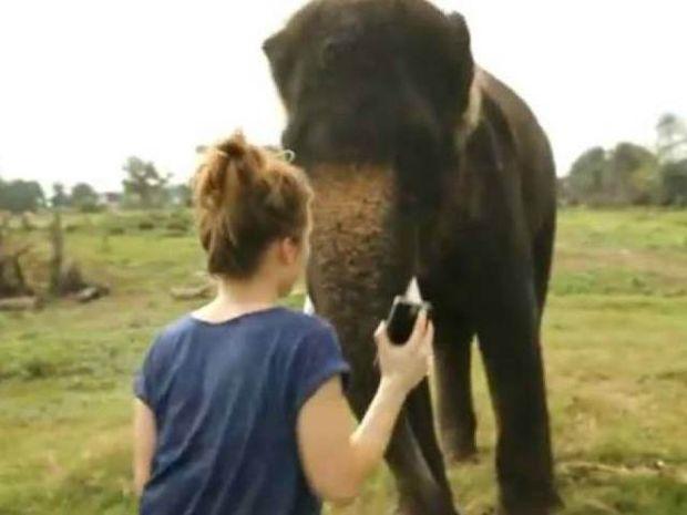 Ελέφαντας χειρίζεται το Galaxy Note καλύτερα από άνθρωπο!