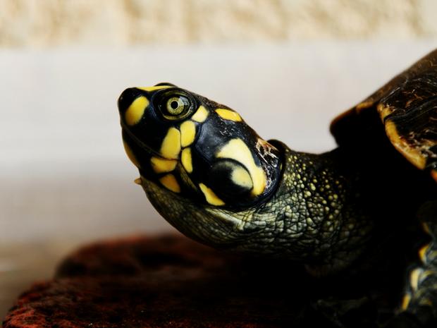 Εσωτερικές ασκήσεις: Η άσκηση της Χελώνας
