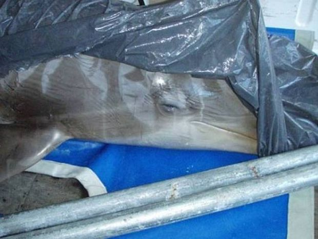 Δελφίνια έχασαν τη ζωή τους σε rave party