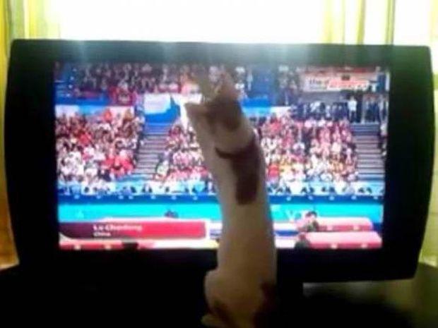 H γάτα που αγαπάει το τραμπολίνο