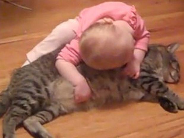 Ο πιο υπομονετικός γάτος του κόσμου!