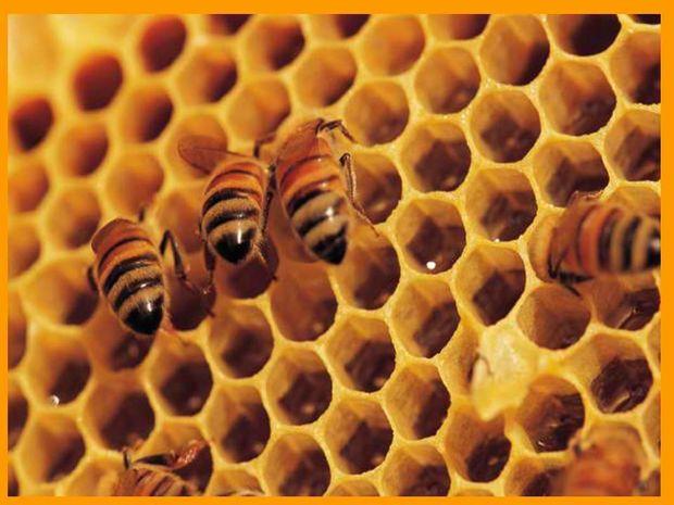 Το μέλι και οι άγνωστες ιδιότητές του στην Αρχαία Ελλάδα