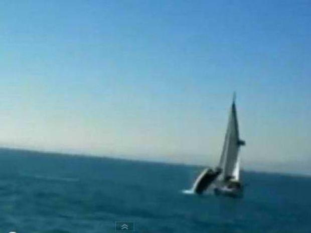 Φάλαινα βουλιάζει κότερο (video)