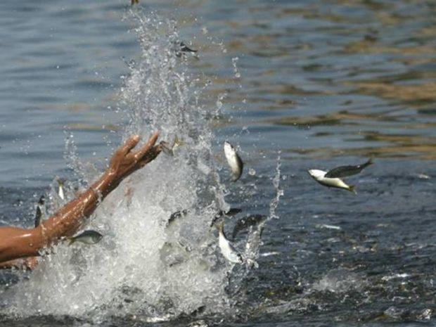 Απλήρωτος εργάτης... ελευθέρωσε ψάρια στη θάλασσα για εκδίκηση!