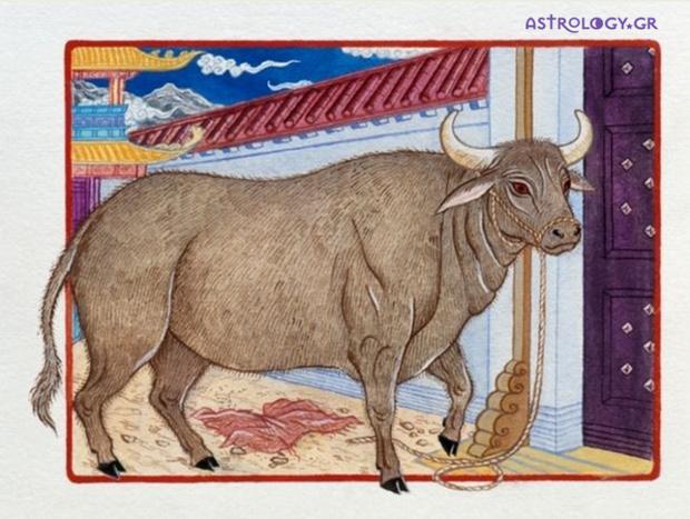 Ζώδια Κινέζικης Αστρολογίας: Ο Βούβαλος