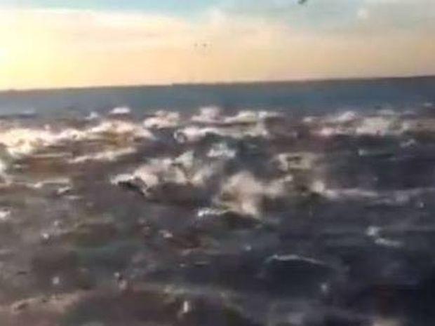 Το βίντεο με τα 100.000 δελφίνια που σαρώνει στο διαδίκτυο