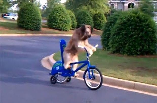 ΑΠΙΘΑΝΟ VIDEO: 4 σκύλοι με απίστευτες ανθρώπινες ικανότητες!