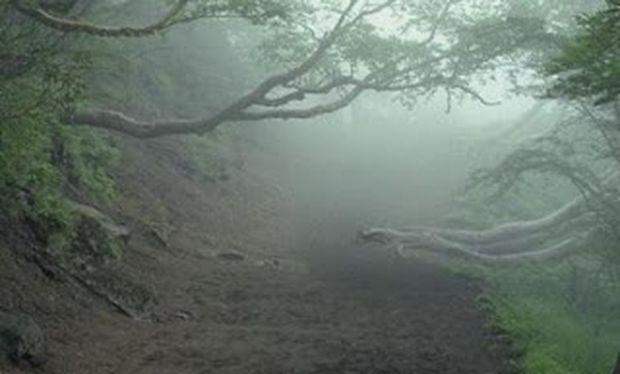 Aokigahara Forest, το δάσος των αυτοκτονιών...