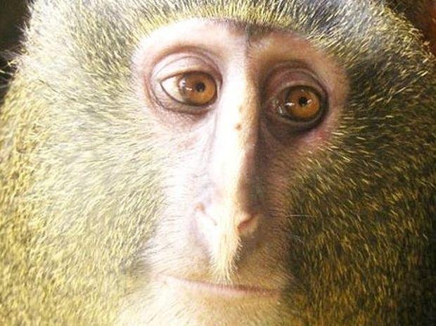 ΥΠΕΡΟΧΕΣ ΕΙΚΟΝΕΣ: O πίθηκος με τα… ανθρώπινα μάτια!
