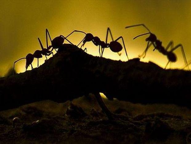 Να πώς θα εξαφανίσετε τα μυρμήγκια και τις κατσαρίδες... από το σπίτι σας!