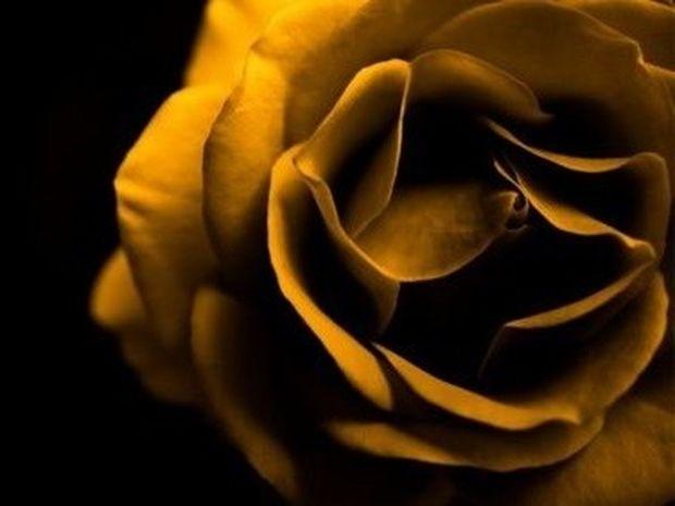 Έξι χρώματα τριαντάφυλλων και η σημασία τους