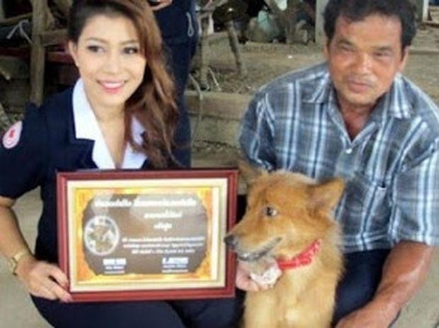 Σκύλος-ήρωας στην Ταϋλάνδη έσωσε νεογέννητο μωρό!