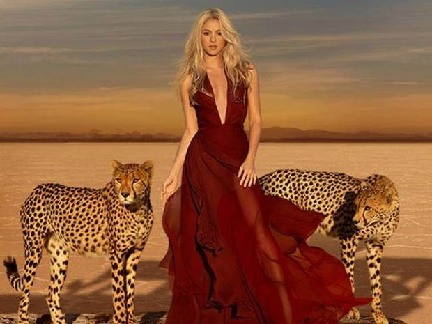 Ατρόμητη η Shakira: Φωτογραφήθηκε δίπλα σε δύο τσιτάχ (photo)!