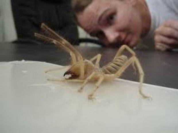 Δείτε πώς έγινε 9 μέρες αφού τον δάγκωσε αράχνη!