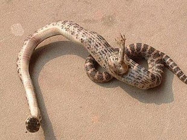 Σοκαριστικό: Φίδι με πόδια Ανακαλύφθηκε στην Κίνα!