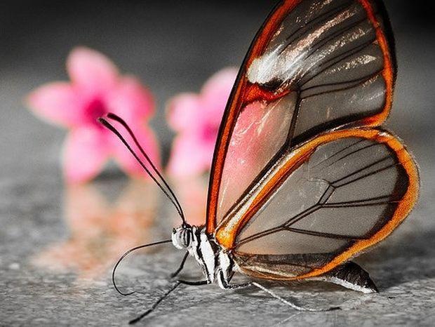 ΔΕΙΤΕ: Πεταλούδες με διάφανα φτερά