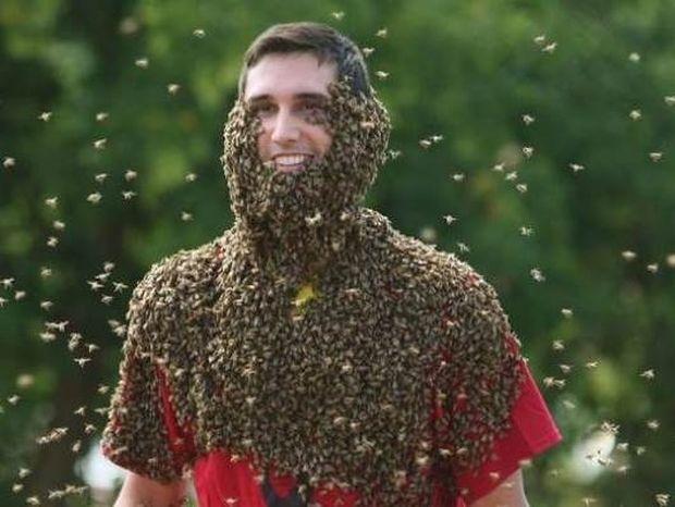 «Γενειάδες» μελισσών: Ένα... ανατριχιαστικός διαγωνισμός! (pics)