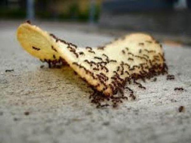 Απαλλάξου από τα μυρμήγκια με 3 απλά tips!