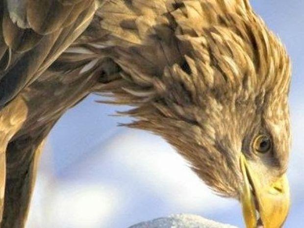 VIDEO: Δείτε πως βλέπει ένας αετός εν ώρα πτήσης