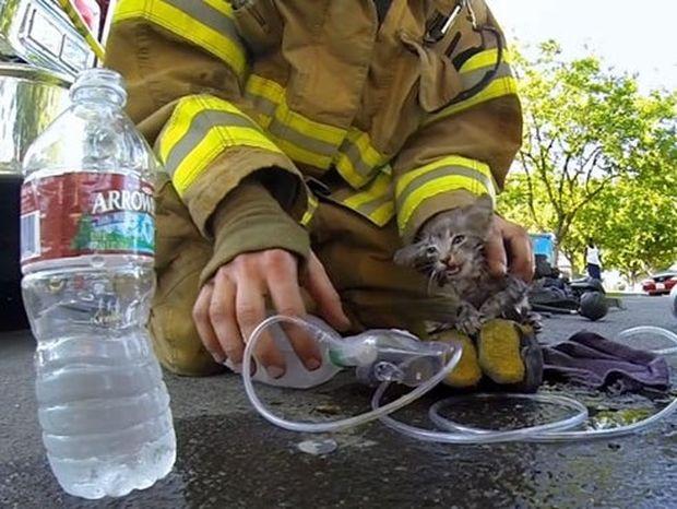 Πυροσβέστης σώζει γατάκι και το βίντεο κάνει τον γύρο του διαδικτύου