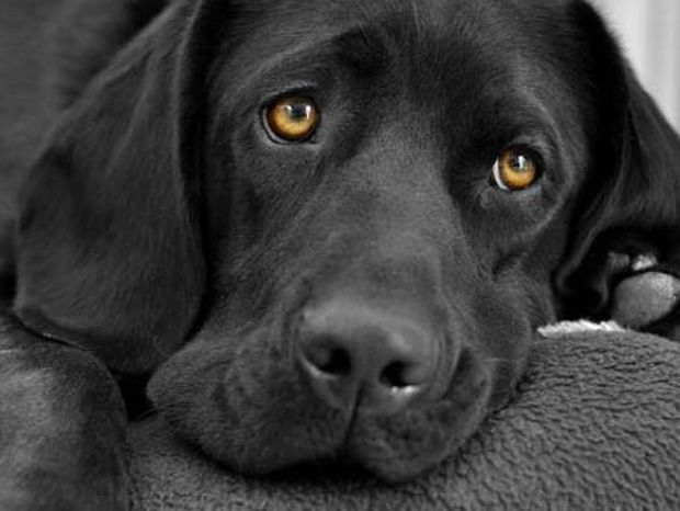 Ο σκύλος είναι ο καλύτερος φίλος του ανθρώπου: Ιδού η απόδειξη! (vid)