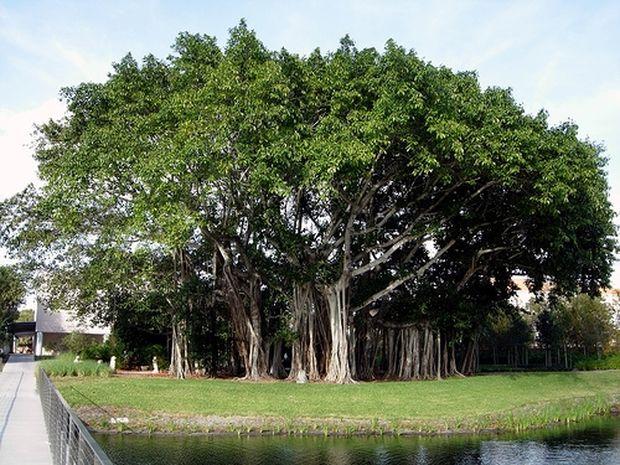 ΔΕΙΤΕ: 5 απίστευτα δέντρα του κόσμου
