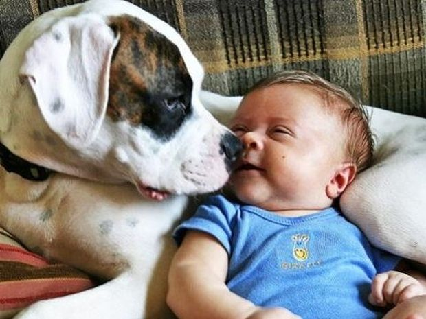 Τι κάνουν τα μωρά όταν στο σπίτι υπάρχουν σκυλάκια;