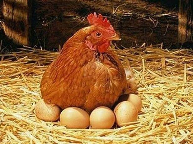 Διαιτητής σε παράγοντα: «Πήγαινε έξω ρε κότα!»