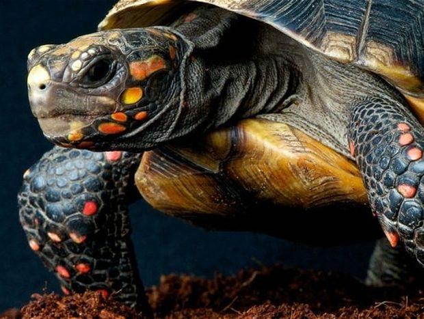 Φενγκ Σούι: Χελώνα, σύμβολο μακροζωίας, καλής υγείας και προστασίας