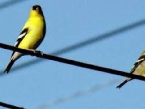 Γιατί τα πουλιά δεν παθαίνουν ηλεκτροπληξία στα καλώδια της ΔΕΗ;