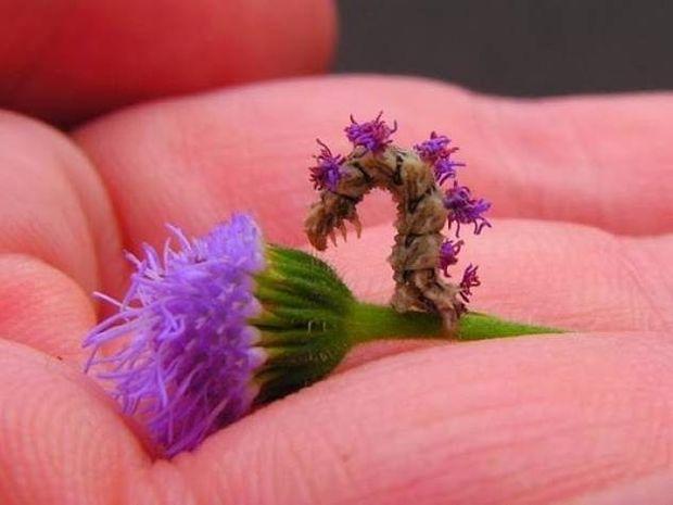 Αν νομίζετε ότι είναι μόνο ένα λουλούδι κάνετε λάθος...(pics)