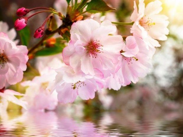 Οι τυχερές και όμορφες στιγμές της ημέρας: Παρασκευή 7 Μαρτίου