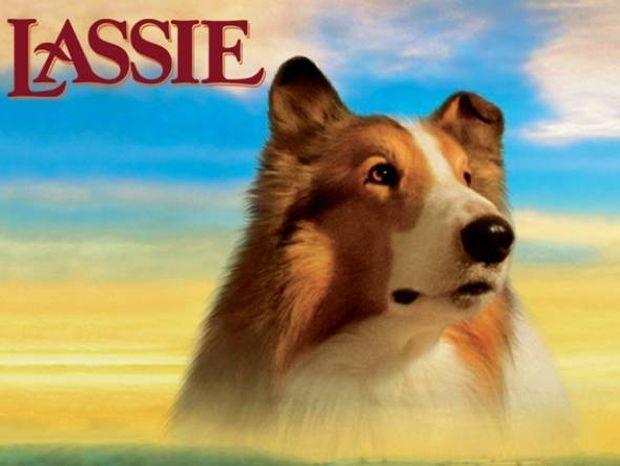 Τα 10 διασημότερα σκυλιά όλων των εποχών