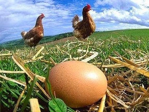 Πως ξεχωρίζουμε τα φρέσκα αυγά; Έξυπνο και απλό κόλπο!