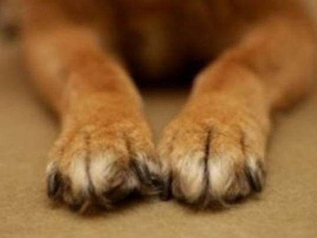 Δείτε γιατί ένας σκύλος μπήκε στο βιβλίο Γκίνες (vid)