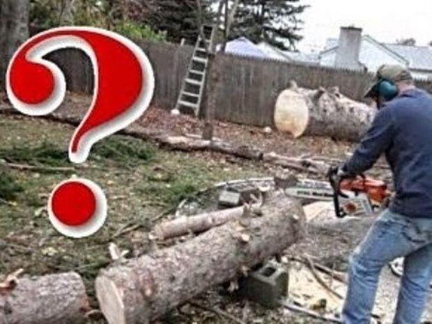 VIDEO: Έκοβε ένα δέντρο άλλα… αυτό που έπαθε δεν το περίμενε!